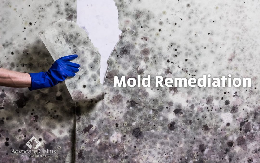 How Much Does It Cost For Mold Remediation In South Florida?